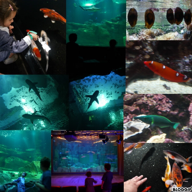1024x768_art_2650_aquarium