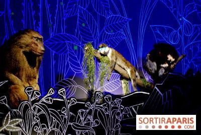 106372-exposition-nuit-au-museum-national-d-histoire-naturelle